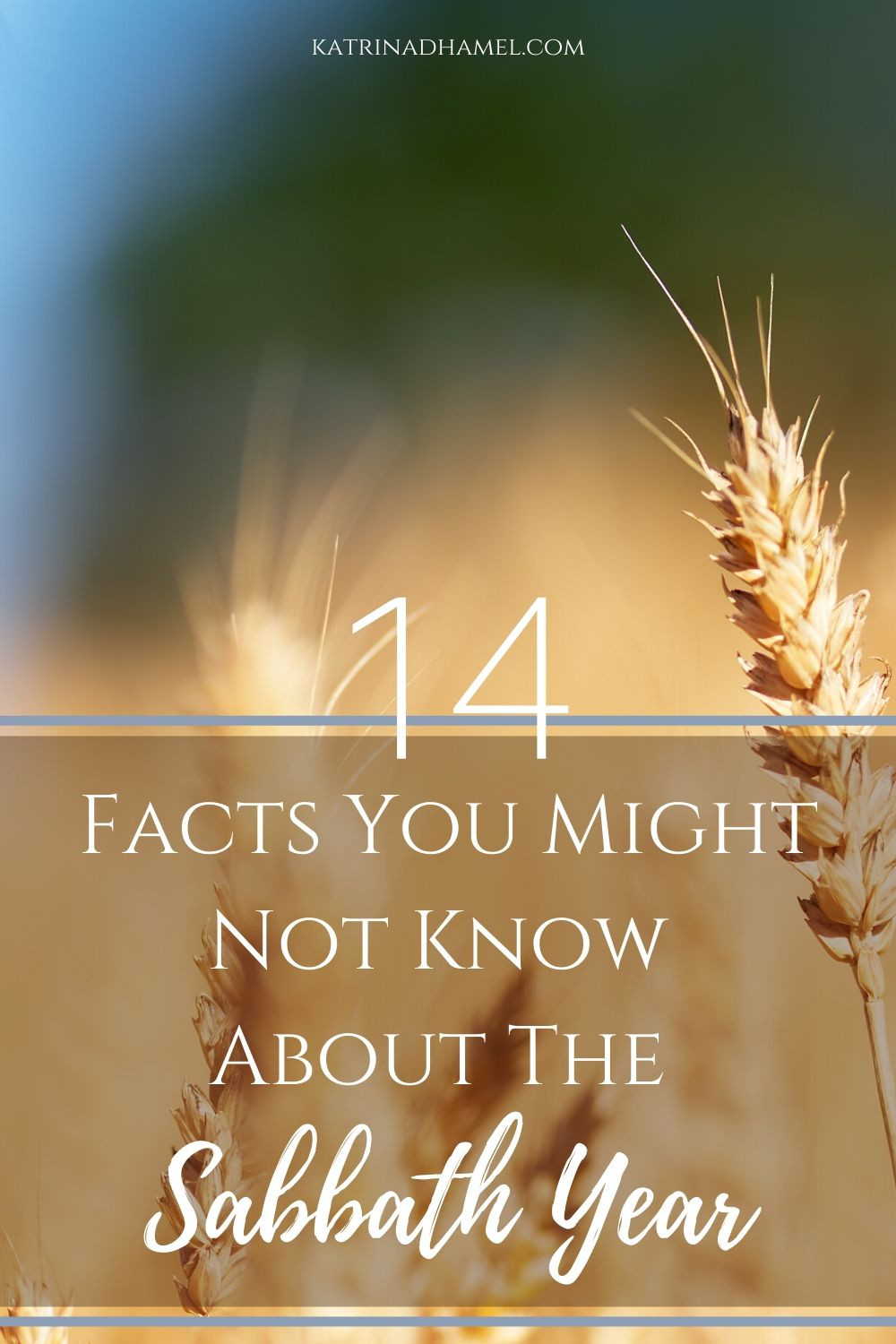 14 Facts you might not know about the sabbath year on a background of a stalk of ripe wheat