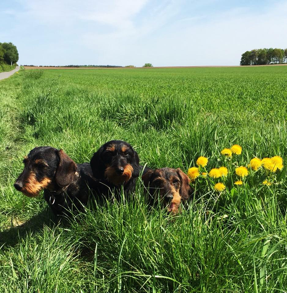 Drei in der Wiese