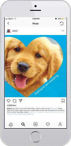 petcoinstagrammockup.jpg