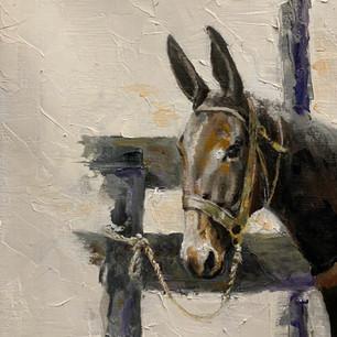 Mule #7