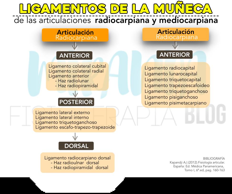 ligamentos de la muñeca: de la articulacion radiocarpiana y mediocarpiana