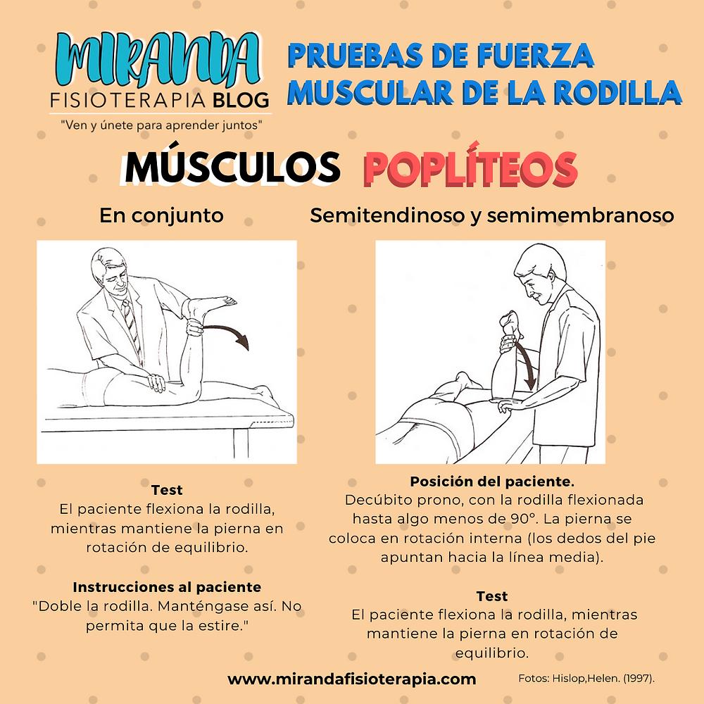Pruebas de fuerza muscular de la rodilla: Músculos poplíteos (biceps crural, semitendinoso y semimembranoso)