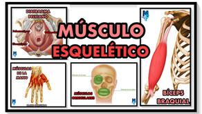 Tejido músculoesquelético