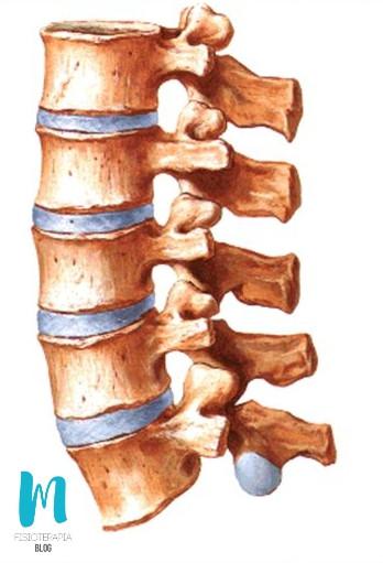 articulaciones de los cuerpos vertebrales