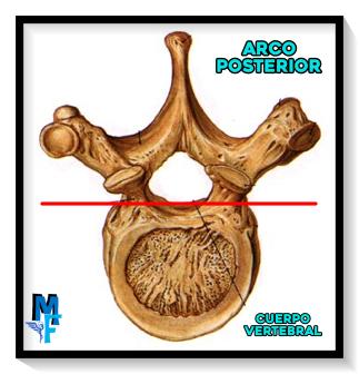 Vértebra, sus componentes