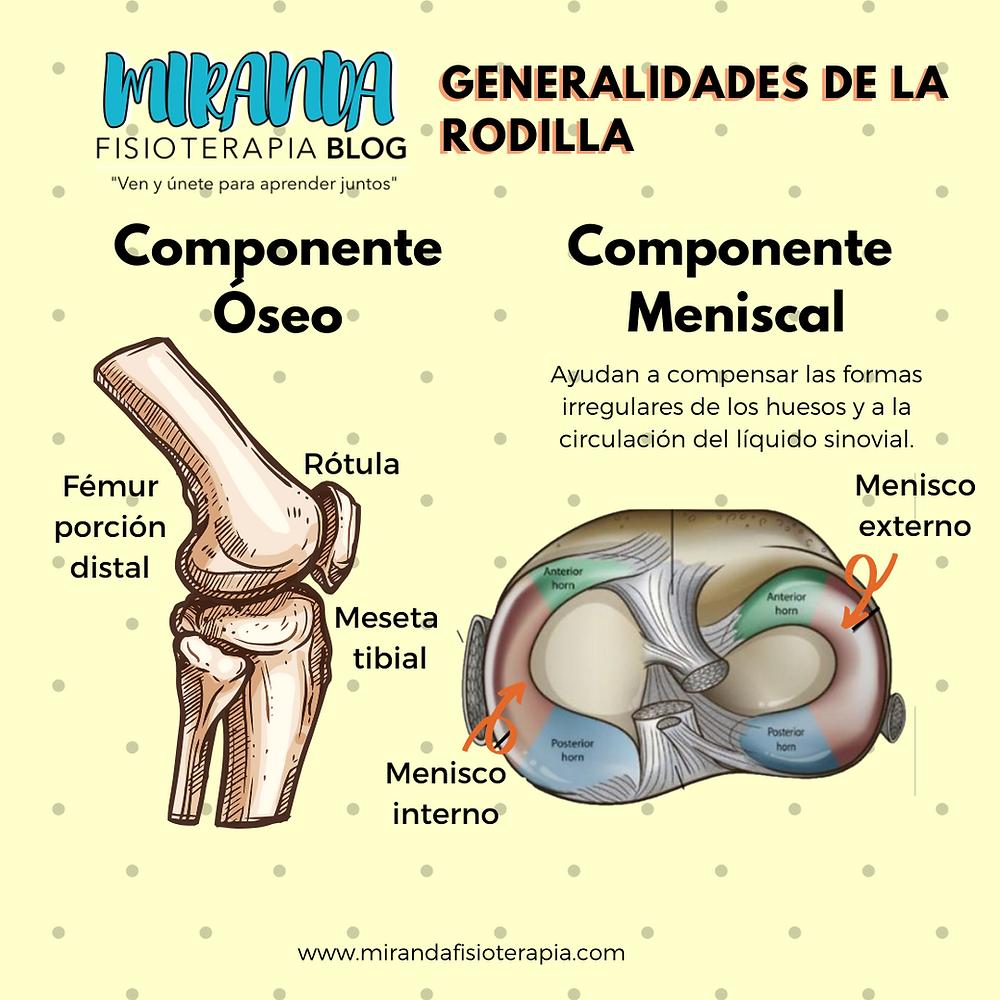 Generalidades de la rodilla: componente óseo y meniscal