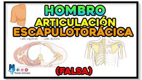 Articulación escapulotorácica del hombro (falsa)