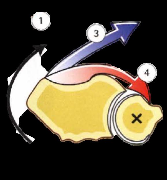 músculos de la pronación: pronador cuadrado y pronador redondo