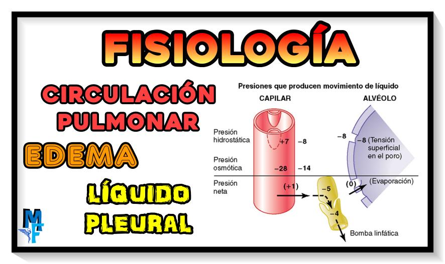 FISIOLOGÍA: circulación pulmonar, edema y líquido pleural