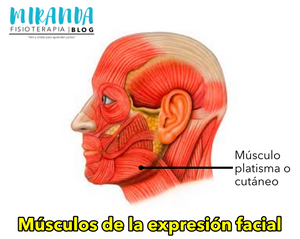 Músculo platisma - músculos de la expresión facial