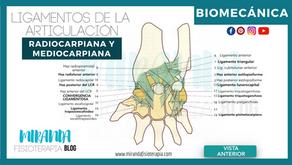 Ligamentos de la articulación radiocarpiana y mediocarpiana