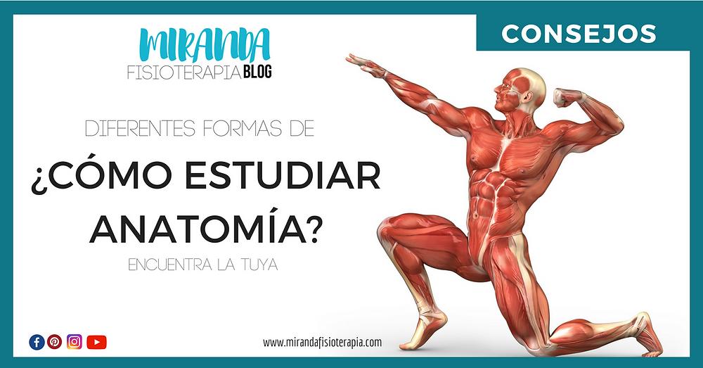 ¿Cómo estudiar anatomía?
