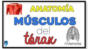 Músculos del tórax: anterolaterales