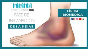Inflamación: Fase de inflamación de 1 a 6 días