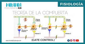 teoría de la compuerta (gate control) - fisiología - Sistema Nervioso