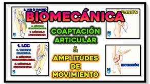 Factores de coaptación articular del codo y amplitudes de movimiento