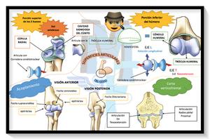 MAPA CONCEPTUAL: Superficies articulares del codo y paleta humeral - Miranda Fisioterapia BLOG