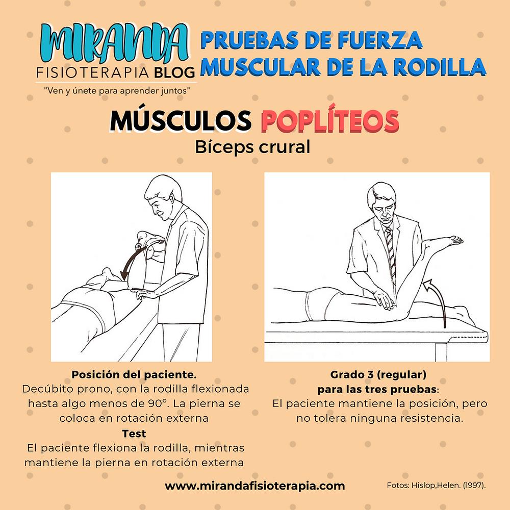 Pruebas de fuerza muscular de la rodilla: músculo bíceps crural (flexor de rodilla)