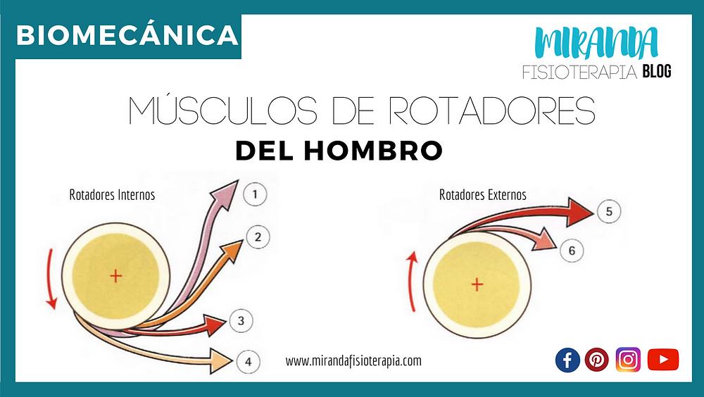 músculos rotadores del hombro: Biomecánica