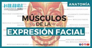 Músculos de la expresión facial o músculos faciales - miranda fisioterapia blog