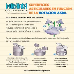 Superficies articulares en función de la rotación axial