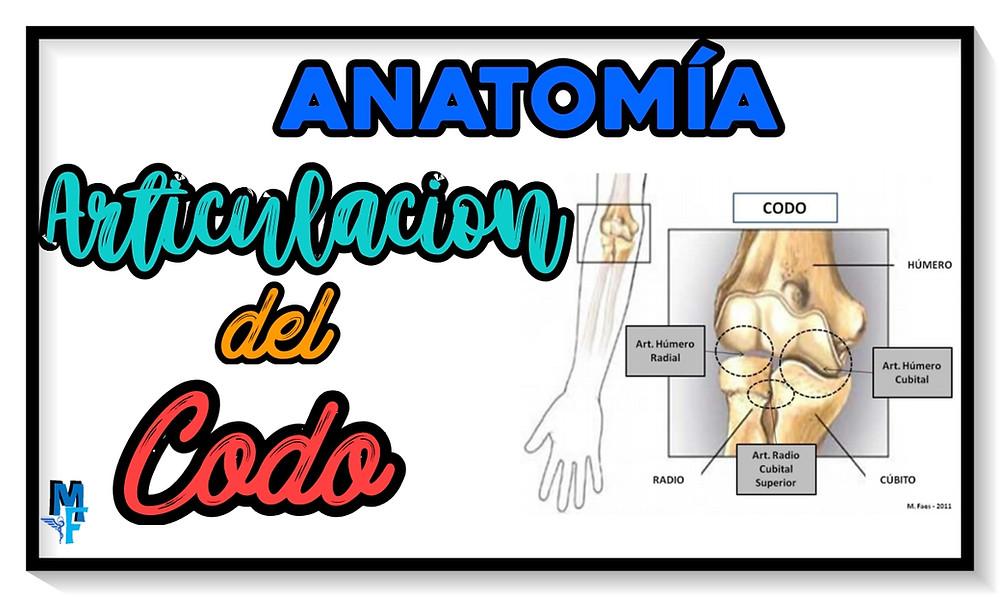 articulaciones del codo (anatomía) - miranda fisioterapia blog