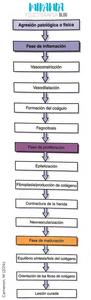 PROCESO DE INFLAMACIÓN