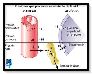 PRESIONES DEL CAPILAR Y EL ALVÉOLO