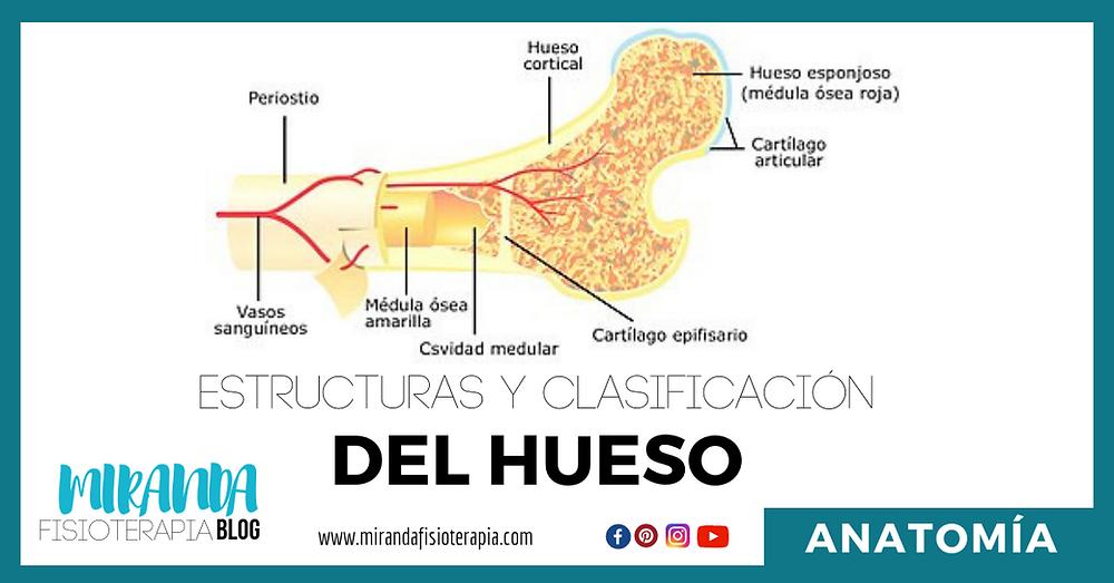 estructuras y clasificación del hueso