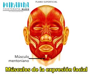 Músculo mentoniano - músculos de la expresión facial