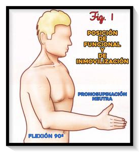 posición funcional y de inmovilización del codo