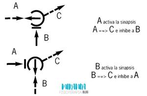 Efecto puerta o Gate control: mecanismo de activación-inhibición: corriente TENS