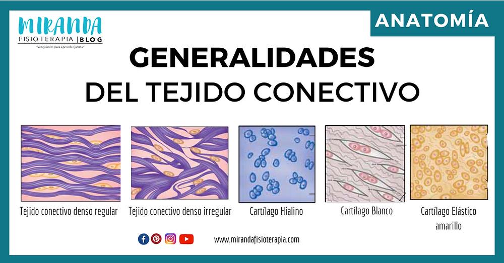 generalidades del tejido conectivo