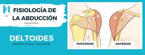 Fisiología de la abducción: deltoides anterior y posterior