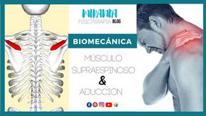 Músculo supraespinoso y aducción (hombro)