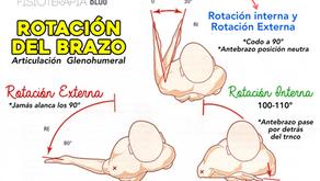 Rotación del brazo por la articulación glenohumeral