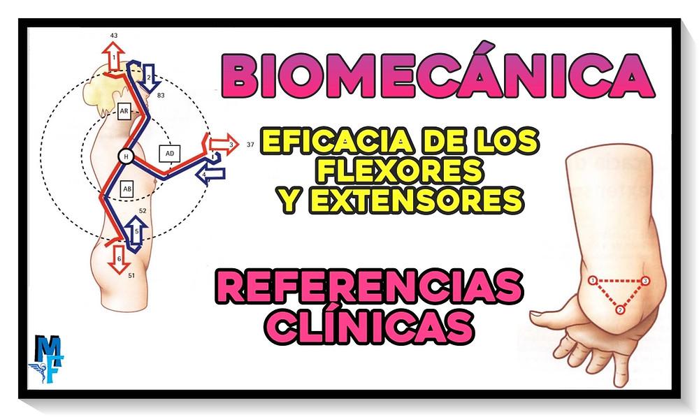 Biomecánica: referencias clínicas y eficacia de los flexores y extensores del codo