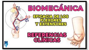 Referencias clínicas y eficacia de los flexores y extensores del codo