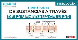 transporte de sustancias a través de la membrana celular - miranda fisioterapia blog