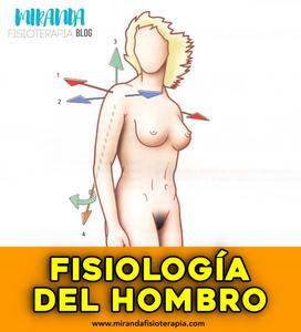 4 ejes principales de movimiento del hombro: eje transversal, anteroposterior, vertica y longitudinal del húmero
