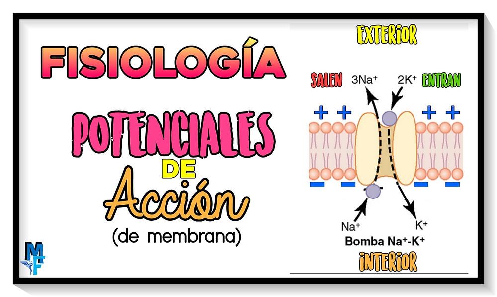 potenciales de acción en membrana