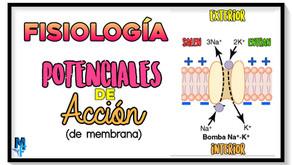 Potenciales de acción de la membrana