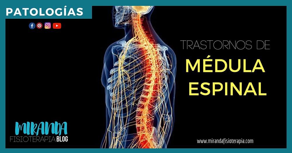 patologías de la médula espinal - miranda fisioterapia blog