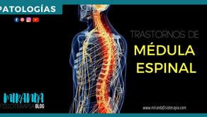 Patologías de la médula espinal