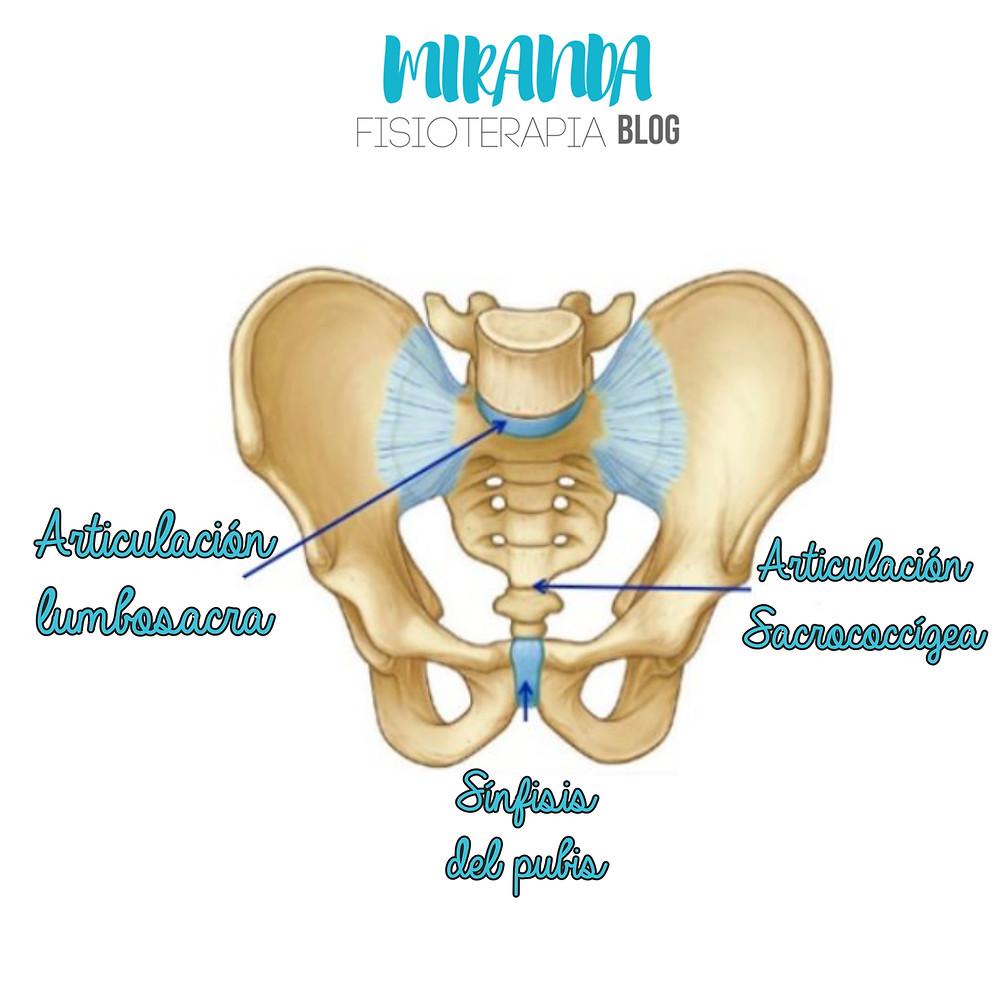 articulación lumbosacra y articulación sacrococcígea