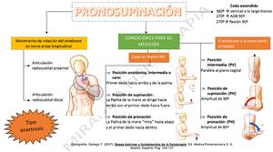 mapa conceptual de la pronosupinación del codo y la muñeca