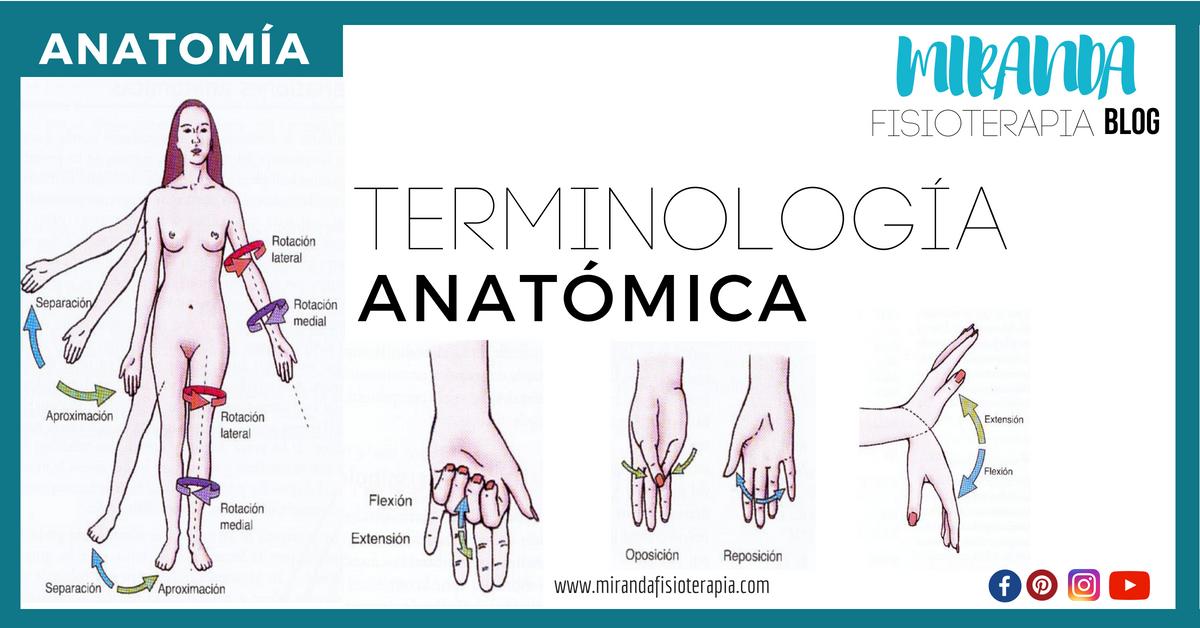 NOMENCLATURA DE ANATOMIA | Miranda Fisioterapia Blog | \
