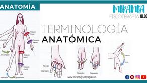 Terminología de anatomía