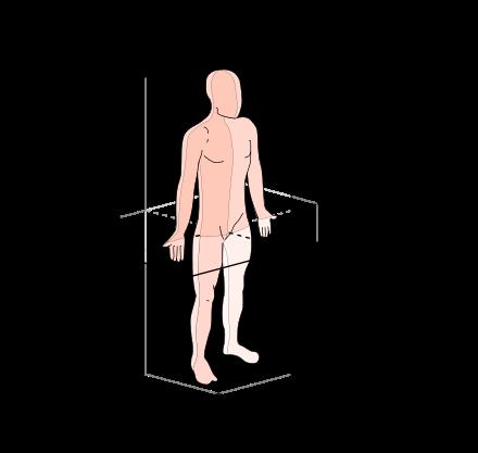 ejes del cuerpo humano - planos y ejes
