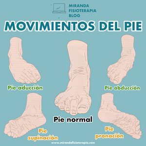 movimientos del pie - miranda fisioterapia blog